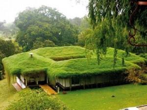 tetőkert tervezés